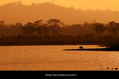 Incredible India (Edgar Thissen) Tags: park sunset india nature asia wildlife indian national rhino assam rhinoceros kaziranga edgarthissen 5735