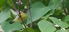 Purple-rumped Sunbird (Leptocoma zeylonica) (Imthyas Ahmed Shirajee) Tags: bird nature birds photography nikon university photographer purple wildlife photographers delta east ahmed ctg bangladesh vr bangla sunbird birdwatcher chittagong 70300 zeylonica leptocomazeylonica d90 rumped imti pakhi purplerumped leptocoma birdsofbangladesh chattagram purplerumpedsunbirdleptocomazeylonica imthyas shirajee mehidibag