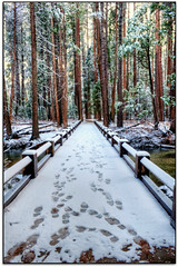 The Path.. (scrapping61) Tags: california bridge snow feast forest path yosemitenationalpark legacy 2012 tistheseason masterclass swp rockpaper artdigital greenscene scrapping61 awardtree tisexcellence daarklands trolledproud artnetcontemporary exoticimage pinnaclephotography admintalk digiralartscene