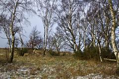 6 February 2013, - Flatts Lane to Pinchinthorpe (The Grey Panther) Tags: cleveland teesside greypanthers pinchinthorpe flattslanecountrypark thegreypanthers