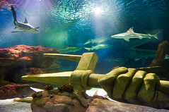Shark Tank Trident