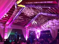 Pink Lighting - Pattern Projection - Antebellum Oaks
