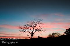 Winter Sunset 2 (LewisMackenziePhotography) Tags: sunset sun colour tree clouds landscape scotland highlands gloaming lochan drumnadrochit beauly