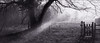 Another Gateway to Heaven (Regular Rod) Tags: morning winter light blackandwhite panorama sunlight tree 120 water river holga fishing gate day shadows derbyshire peakdistrict flyfishing trout bakewell array semistand catchandrelease adox 6x12 holgaheads ysplix rnbderbyshirewye pyrocatechol derbyshirewye catechol chs25art obsidianaqua holgagon schneiderkreuznachangulon90mm filmdev:recipe=8946