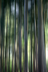 Forest Race (Noutyboy) Tags: wood trees light motion holland nature netherlands colors forest photoshop canon eos zoo licht bomen utrecht thenetherlands experiment picasa natuur bos tiergarten beweging dierentuin kleuren woud nout 2013 amersfoorst 1000d eos1000d noutyboy