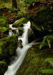 Rushing water, Harrison Lake nature walk path (gks18) Tags: light canada green nature water beautiful canon outdoors coast waterfall moss spring rainforest bc outdoor ferns naturethroughthelens