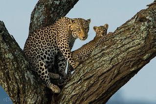 Up a Tree 4058