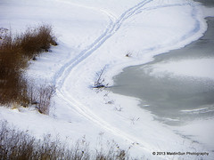 07 February 2013:  Ski Tracks (RobinMSP) Tags: winter snow ice nature outdoors pond skiing meadow crosscountryskiing skitracks dailywalk february2013 maidinsunphotography