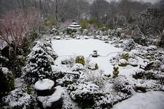 Garden after early spring snow (March 22) (Four Seasons Garden) Tags: fourseasonsgarden
