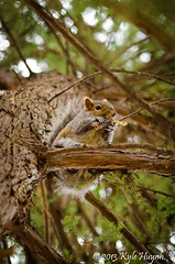 Squirrel on the tree (Kyle Huynh) Tags: squirrelonthetree