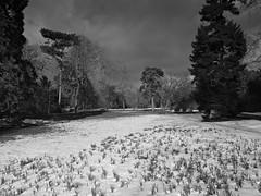 Neige sur Bagatelle (Sylvain Courant photographies) Tags: bw snow storm paris noir noiretblanc boulogne hiver jardin vert ciel sombre neige parc froid bois neuilly tempete bagatelle orageux sylvaincourant