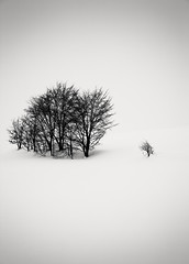A Dream within a Dream (hiromichiendo) Tags: trees winter blackandwhite bw snow abstract art nature monochrome japan landscape still fineart silence zen nd minimalism tranquil
