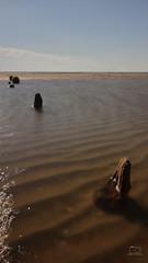 alte Buhnen (patrickbochmann206) Tags: groyne water sea northsea island rm