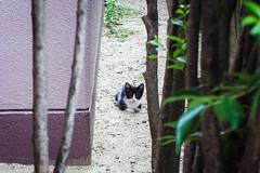 Today's Cat@2016-07-22 (masatsu) Tags: cat catspotting thebiggestgroupwithonlycats pentax mx1