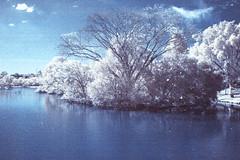 PARK infrared (mara.arantes) Tags: infrared digital nikon trees arvores sky cloud lake landscape ir infravermelho parque