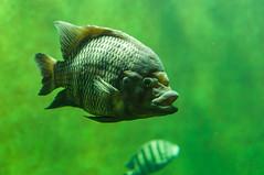 Acuario Agosto 2016 (67) (Fernando Soguero) Tags: acuario zaragoza acuariodezaragoza aragn turismo aquarium nikon d5000 fsoguero fernandosoguero