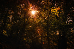 walk in the woods (Morag.) Tags: tree wood forest sunshine autumn colour color scotland nikon d3300 nikkor