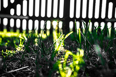 Shinning Fence HFF!! (wolfi8723) Tags: field fence fencefriday nature natur