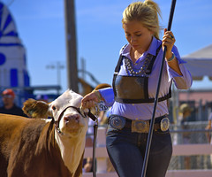 Walking Her Cow (swong95765) Tags: cow animal parade walk woman female blonde leading showing show