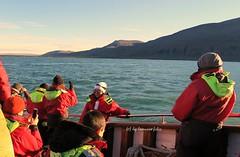 Hsavk avistamiento de ballenas.Islandia (lameato feliz) Tags: islandia navegar mar barco ballenas hsavk