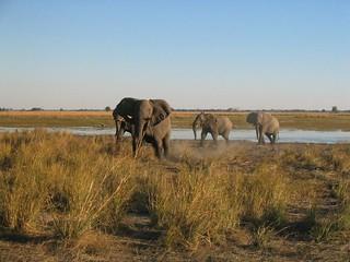 Namibia Dangerous Game Safari - Caprivi Strip 1