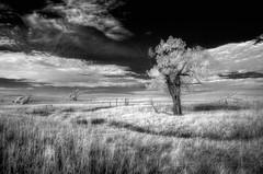 Whimsical Day (JMD Pix) Tags: infrared kansas tallgrass monument trees prairie