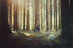 Whisper of Ages (Raphaelle Monvoisin) Tags: trees forest beauty sunset travel sun sunlight light tree summer beautiful wood heart meditation trunk pines whisper explore fireflies
