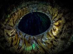 P9141490 (Jeannot Kuenzel) Tags: jeannotkuenzel jeannot kuenzel wwwjk4unet jk4u malta scuba under water underwater diving photography macro supermacro olympus epl5 zen port leica dg macroelmarit 45mm f28 asph ois inon z240 240z ucl165 s2000 moods aliensofthesea aliensofthedeepblue alien deep blue mediterranean sea maltaunderwater maltaunderwatermacro maltaunderwaterphotography bestmaltaunderwaterpictures maltamacro underwaterphotography maltascubadiving supermacrophotography underwatersupermacro underwateralien underwaterworld underwatercreature underwatermacro extrememacro superextrememacro