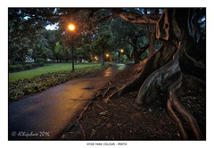 Moreton Bay Fig, Hyde Park (JChipchase) Tags: hydepark perth trees moretonbayfig nikon d750 australia nature