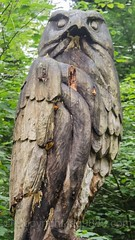 Baum Falke Wood Sculpture, Emmen, Lucerne, Switzerland (jag9889) Tags: sculpture jag9889 falcon hawk reuss 20160727 wood publicart centralswitzerland switzerland emmen outdoor 2016 europe igemmenimwald cantonlucerne alpine art artist ch carver figurenweg forest foresttrail helvetia holz holzskulpturenweg innerschweiz interessengemeinschaft kantonluzern lu landscape lucerne luzern reussuferweg riverbank schnitzer schweiz skulptur skulpturenweg streetart suisse suiza suizra svizzera swiss woodcarver zentralschweiz