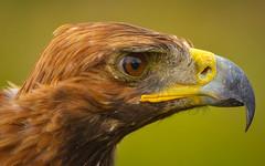 Kyrgyzstan-5342 (EbE_inspiration) Tags: bird kyrgyzstan nikon nikkor d7100 dof green eagle serene nikond7100 outdoor outside 70300mm
