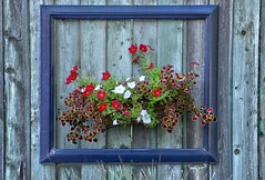 Framed. (Darren-Muir) Tags: summer plants flower texture fence garden wooden basket designer framed pot frame bloom organic ornate herb