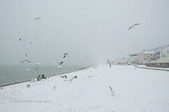 :) 50/52 (ClaudiaJR) Tags: ocean uk sea seagulls snow beach birds kent sandgate