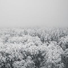 (koeb) Tags: schnee mist snow ice fog forest germany woods nebel hessen wald hesse hoherodskopf
