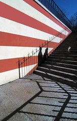 Qui comando io! (meghimeg) Tags: red dog rot cane stairs fence couple explore genova scala rosso coppia inferriata 2013