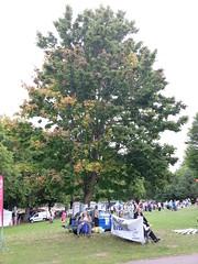 Old man under Tree (pepemczolz) Tags: show old man tree elderly rotherham pensioner flickrandroidapp:filter=none
