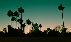 marrakech miami vice (maria_daniela) Tags: trees sunset shadow tree sunrise atardecer shadows sombra palm palmtrees marroqui marrakech marrakesh marruecos palmera sombras