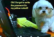 Dogs have Blogs!!!