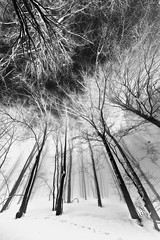 Daitarn's forest (Stefano Caraccio) Tags: wood trees sky snow fog alberi nude branches neve limbs trunks nebbia solarization damp psy rami bosco majella foresta daitarn passolanciano