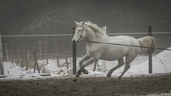 Horses (EHP (Erik Hagstrm)) Tags: horse sweden pony lane equestrian lidl uddevalla equestrianism my longeing tamronsp70200mmf28divcusd