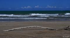Untitled (Bob Stauffer) Tags: ocean seascape beach water landscape puertorico driftwood