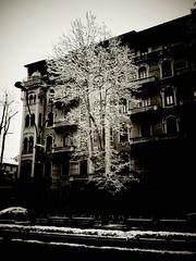 neve a  Torino ( massimo ankor) Tags: torino neve flickrandroidapp:filter=none