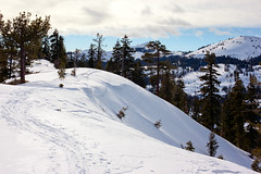 "Tracks along the Ridge_5559 (hkoons) Tags: california snow ski mountains landscape nordic recreation sierras i80 peaks skis donnerlake wintersports sierramountains donnerpeak nordicskiers ""crosscountry"" ""crosscountryskiing"" nordicskiersofnevadacounty ""schallenbergerridge"""