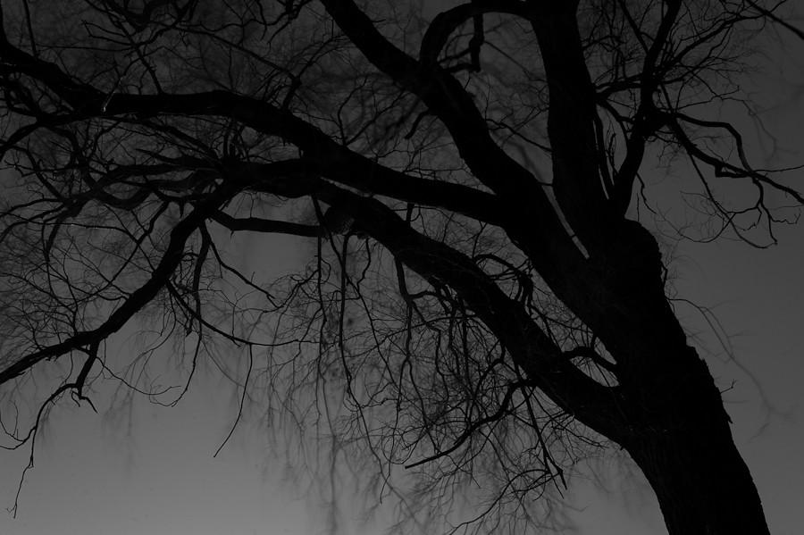 Night Park 046