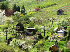 Feeling of Spring (Batikart) Tags: flowers trees houses urban white plant mountains green nature colors leaves yellow gardens canon germany landscape geotagge