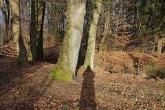 Autoportrait en ombre dans le chemin du soir (dimanche 3 mars 2013, 16:26:44). (Jean-Michel Leroy) Tags: deutschland autoportrait ombre arbres allemagne chemin weg soltau jeanmichelleroy