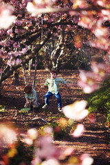 The enchanted forest (catherinelaceyphoto) Tags: family boy love boys girl beautiful kids canon children cherry losangeles kid pretty child blossom father joy daughter mother son pasadena losangelesphotographer catherinelacey