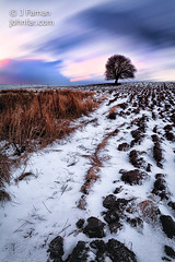 Third time lucky (John Farnan Photography) Tags: sunset snow cold tree field scotland wideangle british lonetree freshsnow furrows lowangle lanarkshire landscapephotography ploughedfield scottishlandscape minimalcolour scottishlandscapephoto