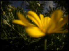 blur love colors yellow nokia smartphone n800... (Photo: donatadag on Flickr)