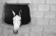 خيلً (osama fahad (*) اسامه الحقباني) Tags: osama انا مهر هنا فلكر حصان خيل فرس الخيل الفرس فهد احصنه بوك فيس فلكري يوتيوب المهر الحقباني تويتر flickrandroidapp:filter=none